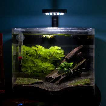 fish-tank-desktop